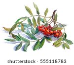 watercolor painting  ash berry | Shutterstock . vector #555118783