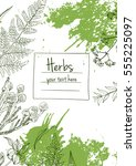 herbs and flowers painted green ... | Shutterstock .eps vector #555225097