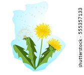 vector illustration dandelions... | Shutterstock .eps vector #555357133