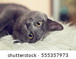 portrait of adorable gray... | Shutterstock . vector #555357973