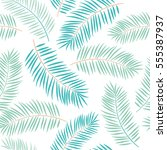 palm leaves on the white... | Shutterstock .eps vector #555387937