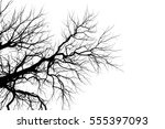 Tree Branch Silhouette  Withou...