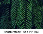 real tropical leaves background ... | Shutterstock . vector #555444403