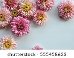 beautiful flowers background... | Shutterstock . vector #555458623
