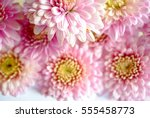 beautiful flowers background... | Shutterstock . vector #555458773
