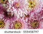 beautiful flowers background... | Shutterstock . vector #555458797