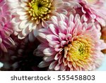 beautiful flowers background... | Shutterstock . vector #555458803