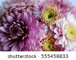 beautiful flowers background... | Shutterstock . vector #555458833