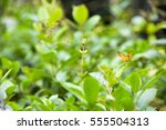 butterfly on a flower blossom   Shutterstock . vector #555504313