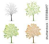 four seasons of tree vector | Shutterstock .eps vector #555588697