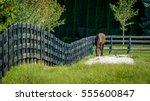 Horse On A Fenced Field  Near...