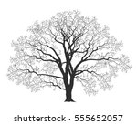 oak tree. silhouette. old tree. ... | Shutterstock .eps vector #555652057