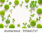 floral spring fresh background  ... | Shutterstock . vector #555661717