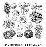 mushroom hand drawn vector... | Shutterstock .eps vector #555716917