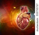 3d Anatomy Of Human Heart