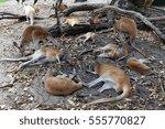 A Troop Of Kangaroos Relaxing...