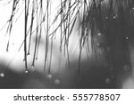 lonely black and white mood  ... | Shutterstock . vector #555778507