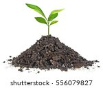 young plant with humus isolated ... | Shutterstock . vector #556079827