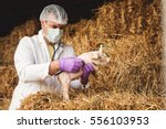 Veterinarian Vaccinating A...
