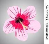 Tropical Flower Illustration...