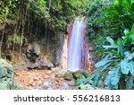 st. lucia botanical gardens ... | Shutterstock . vector #556216813