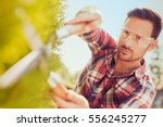 hedge trimming works in a... | Shutterstock . vector #556245277