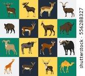 set of color flat hoofed... | Shutterstock .eps vector #556288327