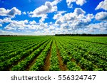 landscape view of a freshly... | Shutterstock . vector #556324747