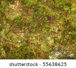 Moss And Lichen On Sandstone