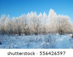 landscape with snowy trees in... | Shutterstock . vector #556426597