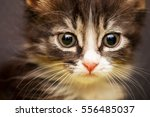 Stock photo portrait of a kitten 556485037