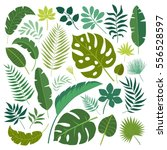 vector set of tropical leaves.  | Shutterstock .eps vector #556528597