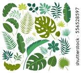 vector set of tropical leaves.  | Shutterstock .eps vector #556528597