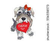 schnauzer in a red bow with... | Shutterstock .eps vector #556558573