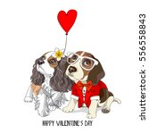 valentine's card. beagle in a... | Shutterstock .eps vector #556558843