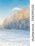 winter landscape | Shutterstock . vector #556590103