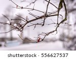 Two Red Berries On A Branch In...