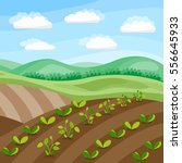 spring field. vegetable sprouts ...   Shutterstock .eps vector #556645933