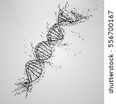 three dimensional dna molecule... | Shutterstock .eps vector #556700167