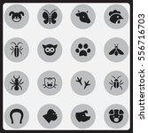 set of 16 editable animal icons.... | Shutterstock .eps vector #556716703