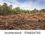 deforestation of rainforest.... | Shutterstock . vector #556826743