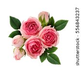 pink rose flowers arrangement... | Shutterstock . vector #556843237