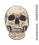 anatomic grunge skull vector... | Shutterstock .eps vector #556895503