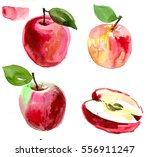 watercolor set with apples ... | Shutterstock . vector #556911247