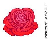 red rose flower isolated hand... | Shutterstock .eps vector #556928317