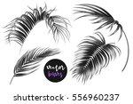 vector palm leaves  monochrome... | Shutterstock .eps vector #556960237