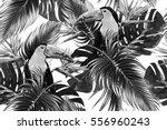 Toucan  Exotic Birds  Tropical...