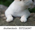 white fluffy cat paws | Shutterstock . vector #557216347