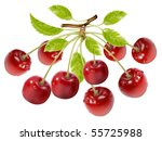 photo realistic vector.branch... | Shutterstock .eps vector #55725988