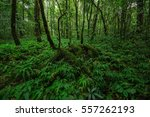 A Dense Mystic Green Forest ...